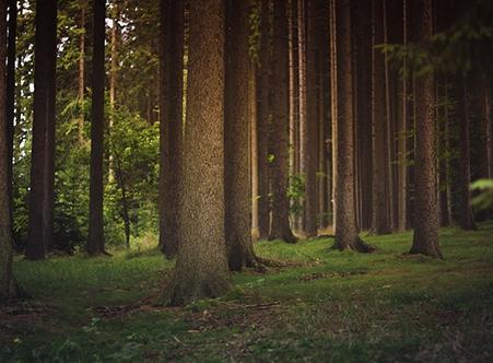 appel des arbres foret