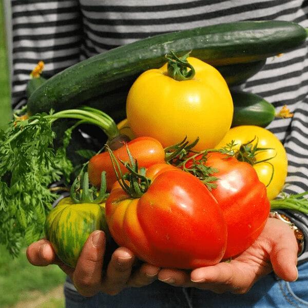 Croissance écologique légumes