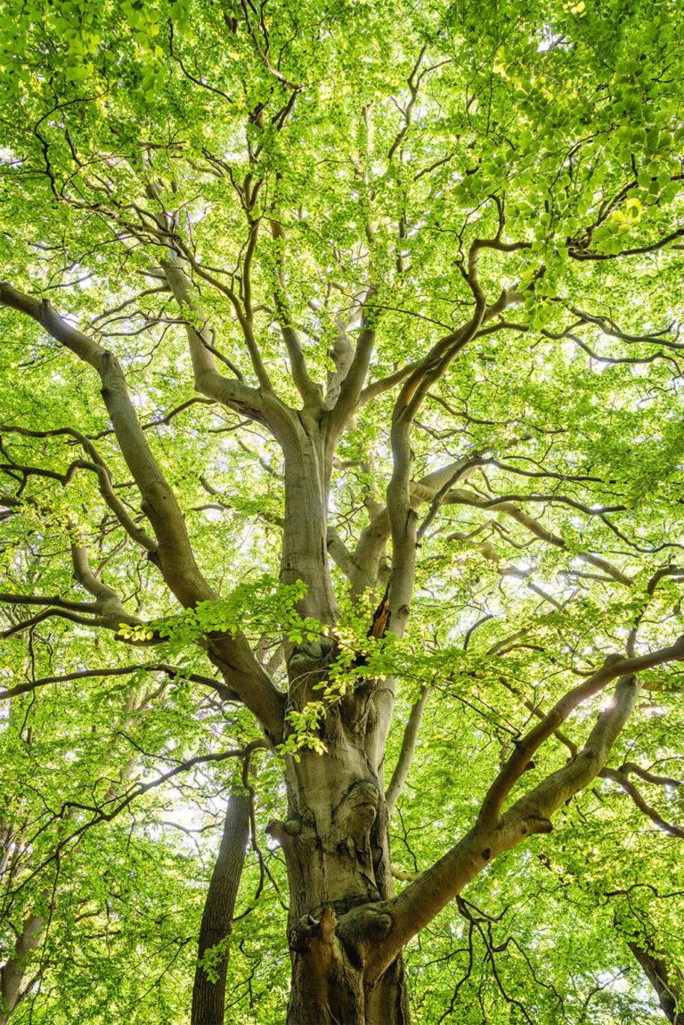 hypnose-arbre-1
