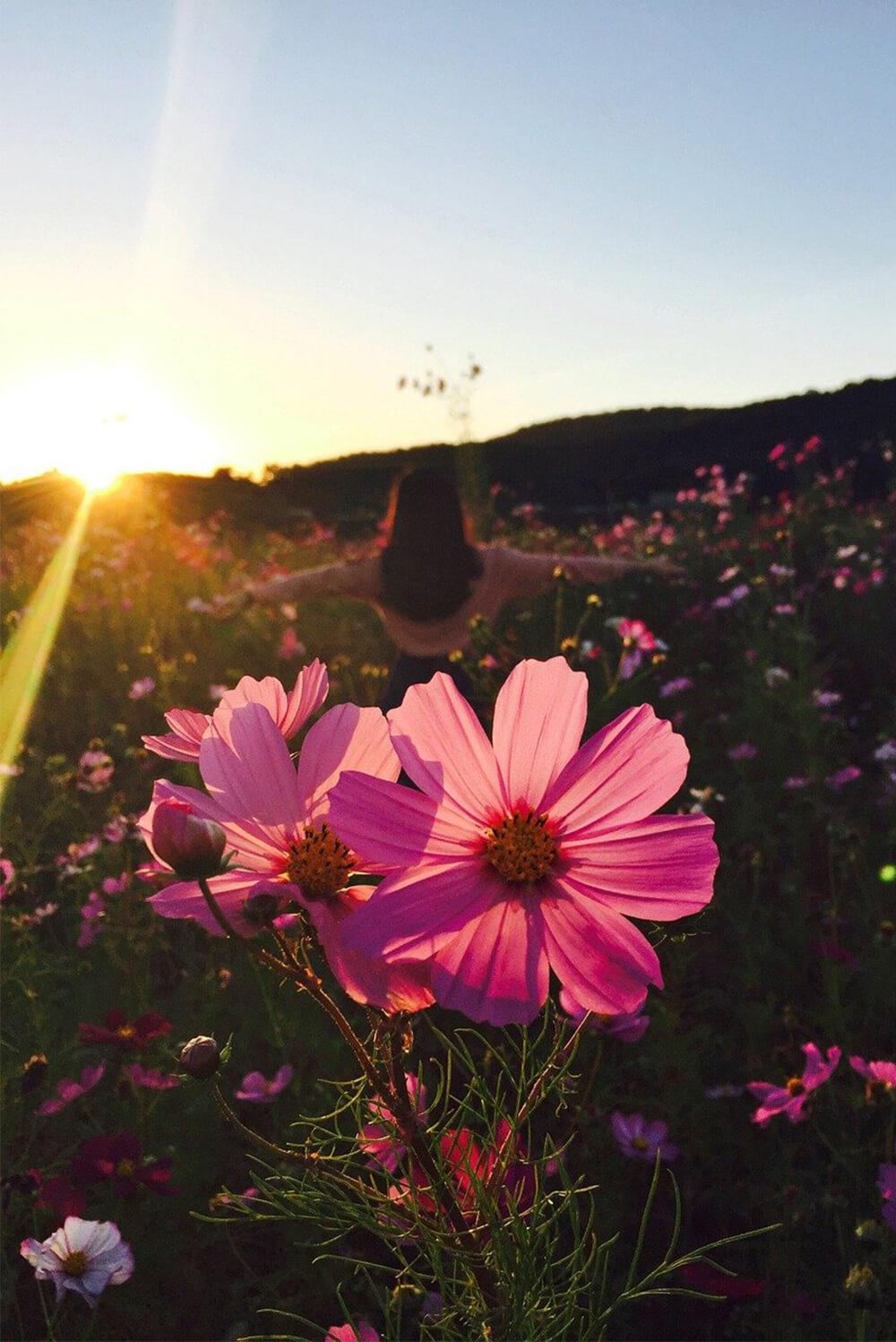 hypnose_fleurs